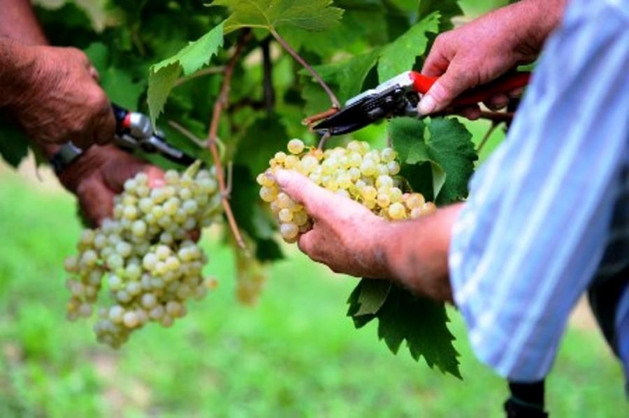 Strada del vino di Custoza