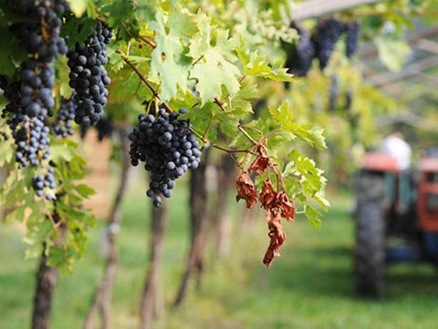 Strada del Vino Valpolicella