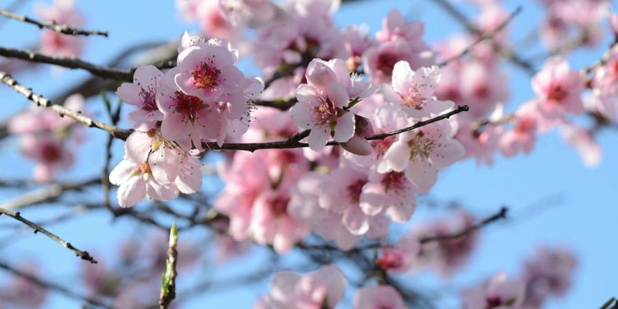 La primavera a Verona